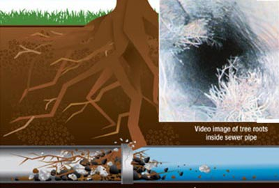 Roots clogging up sewer pipes