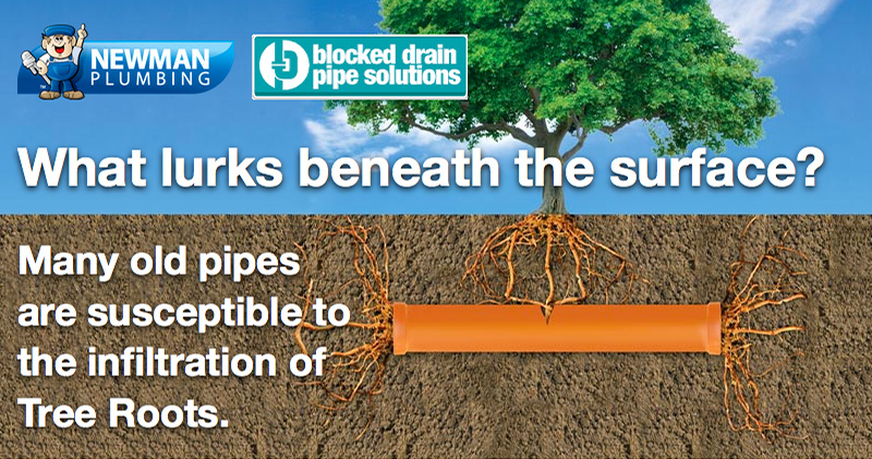 What lurks beneath the surface? Many old pipes are susceptible to the infiltration of Tree Roots.