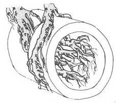 Tree root illustration